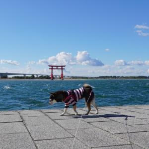 ぶらり浜松・車中泊1日目-2|弁天島海浜公園とペットOK浜松餃子・ビワの木