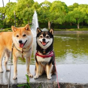 思い出深し平塚市総合公園