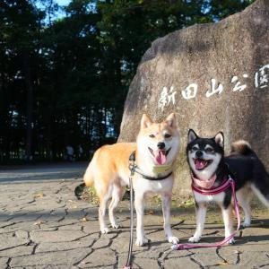 新田山公園でおさんぽ