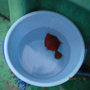佐島(相模湾)  船カワハギ  その8  2019年1月12日(土)  初の二刀流も返り討ちに・・・
