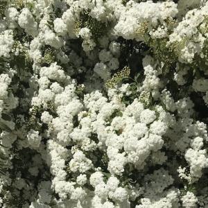 白 / weiß/ white