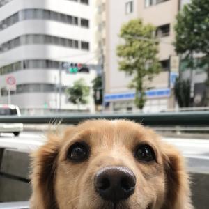 梅雨明け! / Die Regenzeit ist vorbei! / The rainy season is over!
