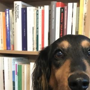本棚 / das Bücherregal, die Bücherregale / bookshelf, bookschelves
