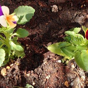 診療所の中庭の鉢植え