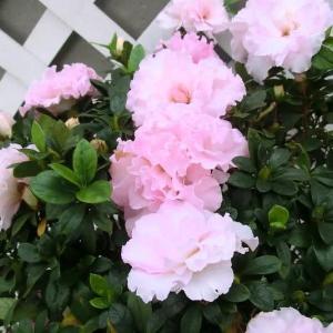 ブライダル・ブーケの花は