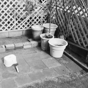 夏休みに夫は庭掃除していました