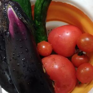 暑くてみんなくたびれています&夏野菜