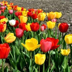 自分の庭に花を咲かせる