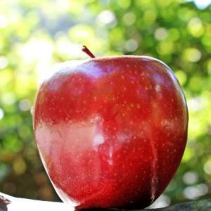 後祭壇から消えたりんご