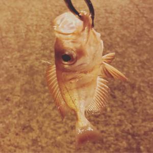 沖縄メアジを探せ! ガチュン探し釣行。
