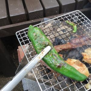 夏野菜の初収穫!待っていた悲劇( ;∀;)