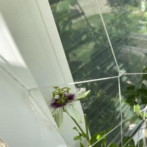2年越しの悲願へ!ついに花が咲いた!
