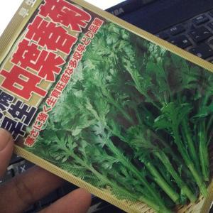 葉物が高い!ということで鍋に向けて準備した種!