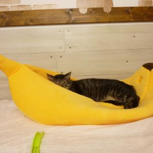 ご支援に感謝とバナナ