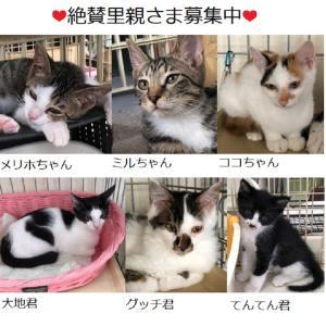 """""""今週のイチ押し子ニャンズ❣️""""保護猫広場ラブとハッピーさん"""