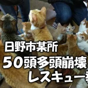 多頭崩壊レスキュー報告【12】保護済のみにゃさん近況
