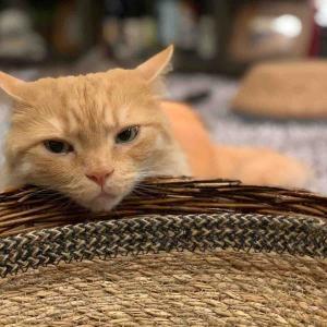 「ヨーダみたいな顔して寛ぐ猫」