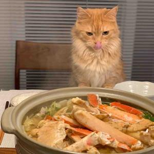 「猫もカニ鍋に舌舐めずり」