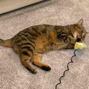 「カインズホームの猫用おもちゃ」最高のコストパフォーマンス!