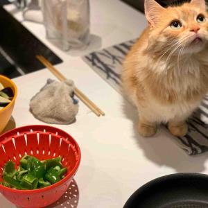 「キッチンの監視員」