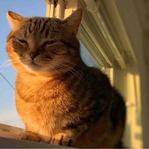 「綺麗な夕陽に照らされるネコ」
