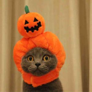 「ハロウィン仮装」