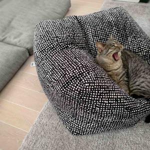 「クッションを使いこなすネコ」