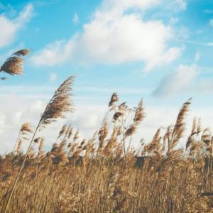 なんとなく、風というものを意識しています