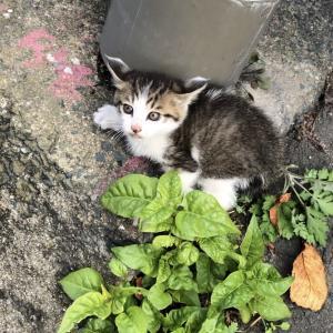 子猫を拾いました