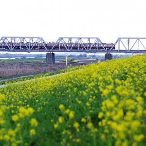 東武日光線 菜の花とリバイバル色