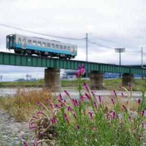 予讃本線 重富川橋梁の野花
