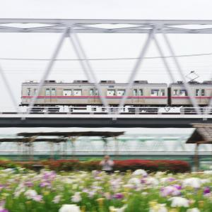 京成電鉄 江戸川橋梁の菖蒲園