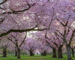 桜満開!!花満開!!『小鹿野町 倉尾ふるさと館』ツーリング(^_-)-☆