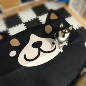 【品番】柴犬グッズ しまむら 2019 ルームマット しば丸!