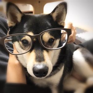 肉球付きメガネ?メガネの愛眼で愛犬家用メガネをゲット!