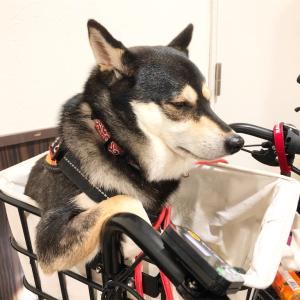 【犬 同伴OK】LA PENTOLA(ラペントラ)さんでランチ!【今福鶴見】