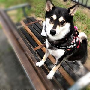 犬の年間の医療費を計算してみた!ペット保険の効果は?【アイペット/ipet】