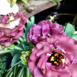 ケチな私が、思わず定価で買った秋の花♪