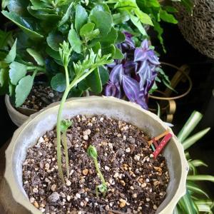 台風が過ぎて活動をはじめる植物たち (*^^*)