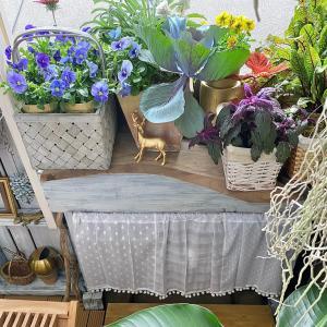 3COINSのカフェカーテン♡お庭で使うと可愛いよ♡ *ଘ(੭*ˊᵕˋ)੭*