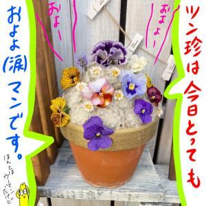 アラフォーの庭あそび (*//艸//) ブログの全てに感謝をした日