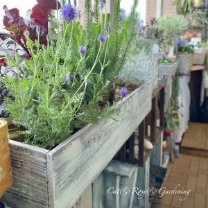 師走の忙しさを癒す庭とガーデニング♡と、お礼状には花の絵を添えて