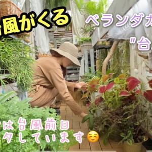 【ベランダガーデンの台風対策】▶︎YouTubeアップしましたଘ(੭*ˊᵕˋ)੭*