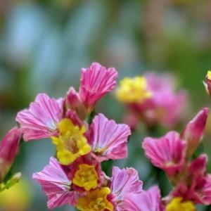 ちいさな花の役割