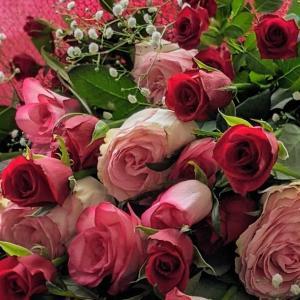 薔薇イロイロ