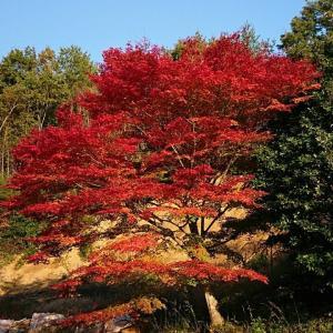 松岳寺の紅葉