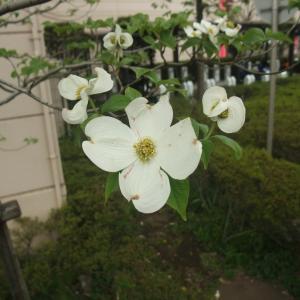 江戸川放水路と家の周辺を自然観察散歩しました♪20日間の発見