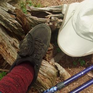 「岳の自然観察トレッキング」これからの予定です♪