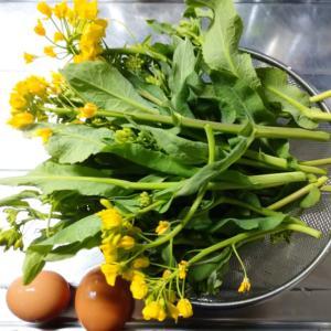 野沢菜の菜花とカブ