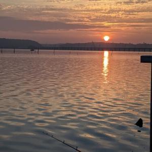 北浦の78センチ  鯉釣り